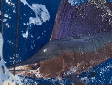 Southbound Sportfishing
